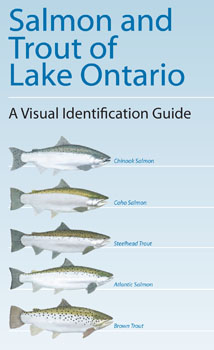 Sea grant s lake ontario fish identification guide is for Community fish list