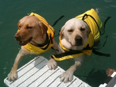 Boating Pet Pals Photo Album